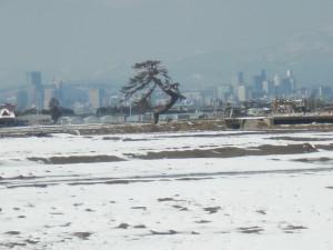 ポツンと残された松-荒浜近辺